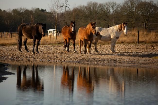 Paarden op Paddock Paradise